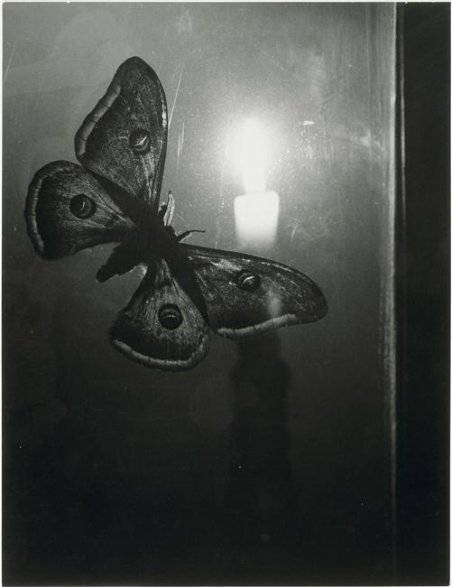 Brassaï (dit), Halasz Gyula (1899-1984), Papillon à la bougie, vers 1933