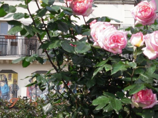 rose-_smokethorn_Paris
